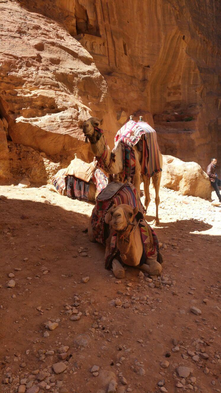 Reis mee naar magisch Jordanië
